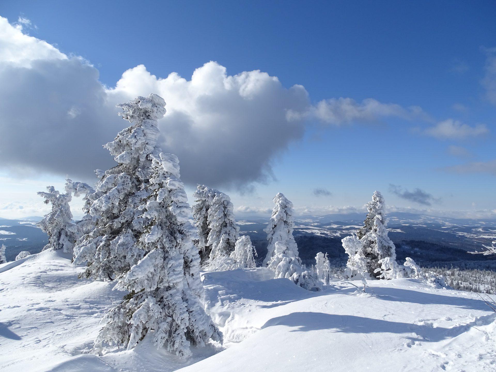 Bavarian-Wald_Foto_Kevin_Lorenz